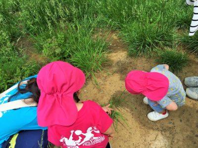 草むらで昆虫探し